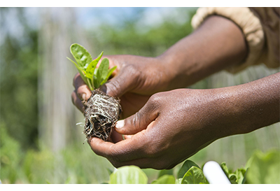 Close up of person planting seeds
